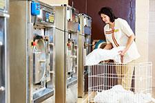 EVC Green laundry